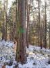 Foto vom Album: Holzeinschlag Berka/Werra