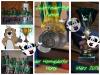 Fotoalbum Zwei-Felder-Ball-Turnier