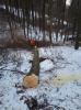 Vorschaubild der Meldung: Holzeinschlag im Berkaer Stadtwald – Januar 2017