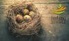 Vorschaubild der Meldung: Nestbau-Zentrale - Ostern in Mittelsachsen