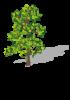 Vorschaubild der Meldung: 1. Frühlingseinsatz 2017 und Baumpflege