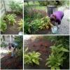 Vorschaubild der Meldung: Fleißige Hände in unserem Vorgarten