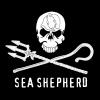 Vorschaubild der Meldung: Sea shepherd - Classe 5b - Mai 2017