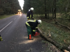 Vorschaubild der Meldung: Feuerwehren durch Orkan Friederike gefordert