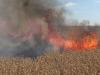 Vorschaubild der Meldung: 50 Hektar Weizen verbrennen in der Börde
