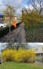Vorschaubild der Meldung: Beispiel: Einheimische Pflanzen versus Exoten