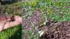 Vorschaubild der Meldung: Nachrichten aus dem Hotzenwald Naturgarten: Anemonen-Becherling