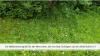 Vorschaubild der Meldung: Blühendes Rickenbach 2.0: Strassenbegleitgrün nur Kosmetik? Rückmeldung Orchideenwiese in Egg