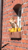 Vorschaubild der Meldung: Tier des Monats Mai: Das Schwein hat 'ne Meise!