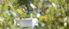 Vorschaubild der Meldung: 21. Anhaltische Obst und Umwelttag