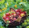 22. Anhaltischer Obst- und Umwelttag am 19.September 2021