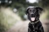 Vorschau:Hundeverein, Ortsgruppe Bad Tennstedt