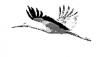 Vorschau:Verein für Vogel – und Naturschutz