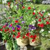 Foto zu Meldung: Mehr Garten geht nicht