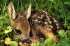 Vorschaubild der Meldung: Nachwuchs bei den Wildtieren