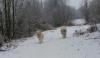 Vorschaubild der Meldung: jetzt ist der Winter bei uns angekommen