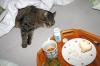 Vorschaubild der Meldung: Katerfrühstück - geht auch anders ...bitte bestellt vor..