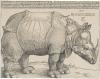 Vorschaubild der Meldung: Klasse 4a: Albrecht Dürer und das Rhinozeros