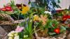 Vorschaubild der Meldung: Blumen zum Frauentag