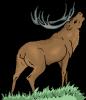 Vorschaubild der Meldung: Alle Versammlungen der Jagdgenossenschaften fallen aus.