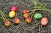 Vorschaubild der Meldung: Verschiebung der Hausmüll- und Bioabfallentsorgung anlässlich der Osterfeiertage 2020 – Ostersamstag Schließung aller Grüngutannahmestellen und Müllumladstation Großenlupnitz