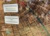 Vorschaubild der Meldung: Sie ist wieder da! Seit dem 15.05.2020 kann man die Baumscheibe wieder am Naturlehrpfad bestaunen.