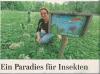 Vorschaubild der Meldung: Eilenburger Stadtpark - ein Eldorado für Schmetterlinge und Co.