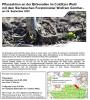 Vorschaubild der Meldung: Pflanzaktion an der Birkenallee im Colditzer Wald