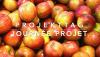 Vorschaubild der Meldung: Projet « Pommes » - 1. Klassen