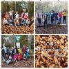 Vorschaubild der Meldung: Herbstausflug in den Wald