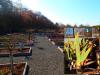 Vorschaubild der Meldung: Ein Jahr im Kräutergarten an der Berzallee Die Schwertlilie (Iris germanica) – Heilkraut des Monats März