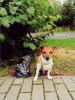 Beschwerden über Hundekot